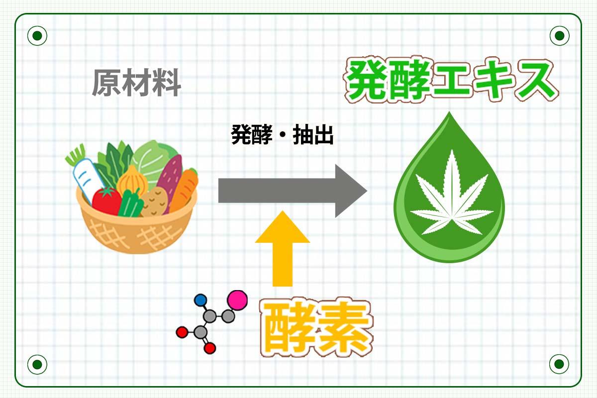 生酵素サプリ発酵エキスと酵素